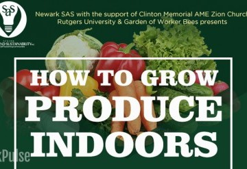 How To Grow Produce Indoors
