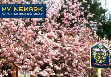 My Newark: Cherry Blossoms